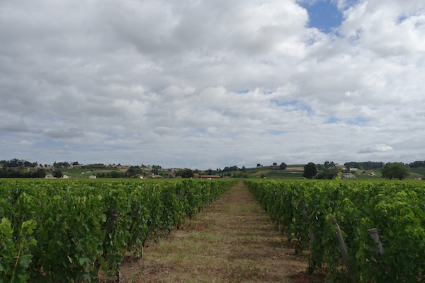Bordeaux vines near St Emilion