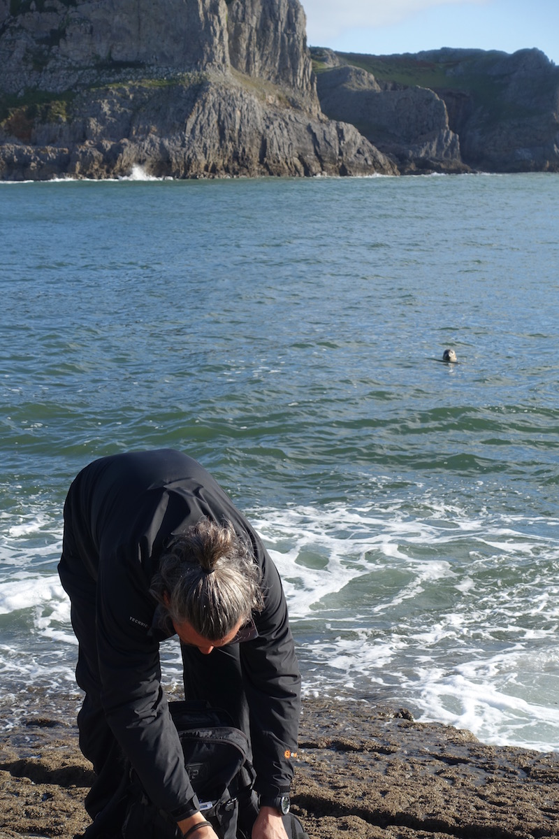 Memorable Gower holiday close to nature Gower seals